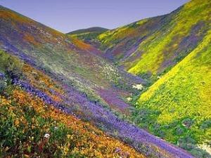 Wild flowers Israel